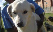 Sandton SPCA needs your help!