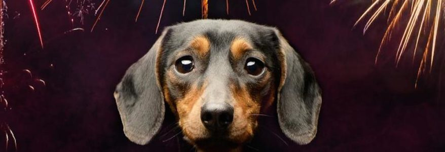 ALERT: Dog Safety in MX40