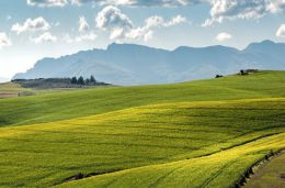 The hard, cold facts about SA's land issue – Lawrence McCrystal