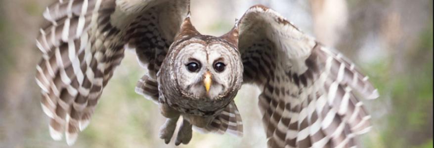 Owl Be Back On Thursday!
